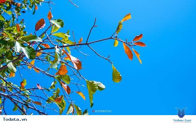 Rức Sắc Màu Hoa Trên Những Nẻo Đường Phượt Mùa Thu - Ảnh 8