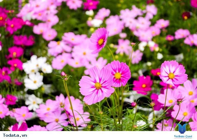 Rức Sắc Màu Hoa Trên Những Nẻo Đường Phượt Mùa Thu - Ảnh 17