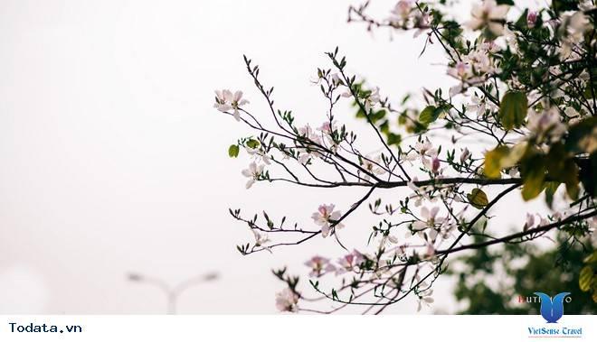 Rức Sắc Màu Hoa Trên Những Nẻo Đường Phượt Mùa Thu - Ảnh 5