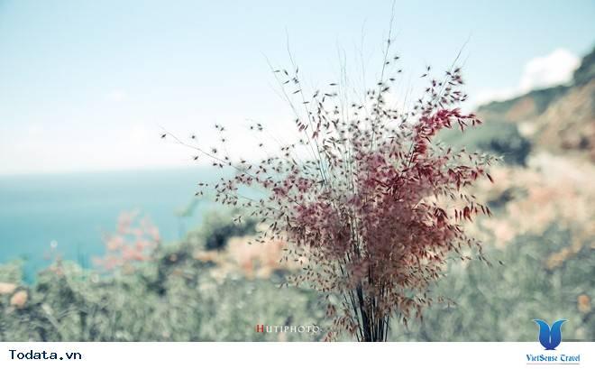 Rức Sắc Màu Hoa Trên Những Nẻo Đường Phượt Mùa Thu - Ảnh 7