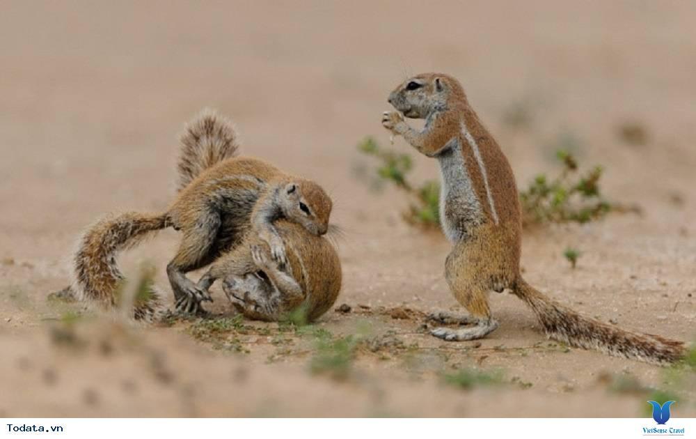 Tham quan công viên Kgalagadi Transfrontier - Ảnh 4