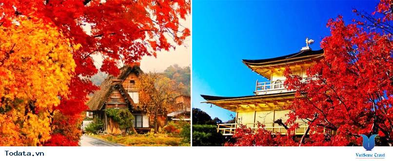 Tour Du Lịch Nhật Bản Mùa Lá Đỏ - Ảnh 2