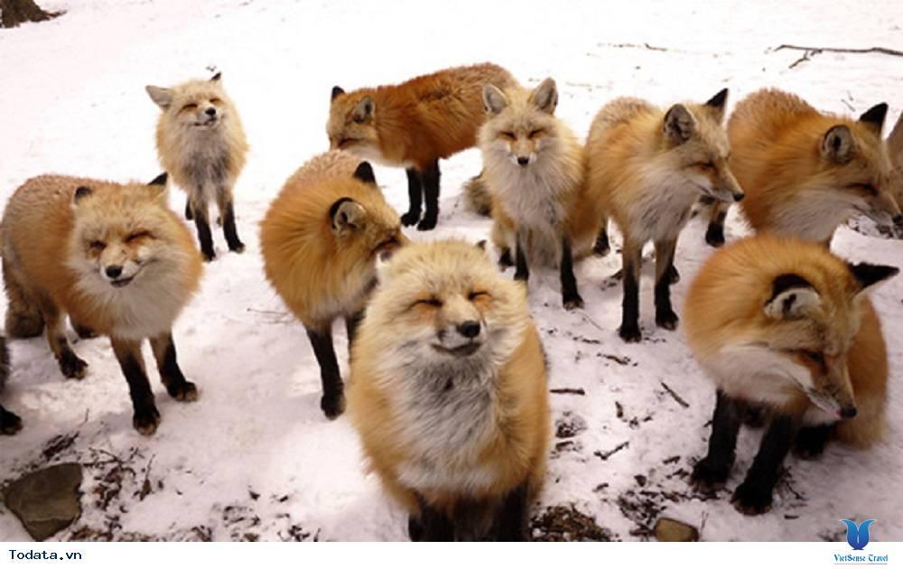 Vui đùa cùng với những con vật đáng yêu tại các thiên đường của Nhật Bản - Ảnh 3