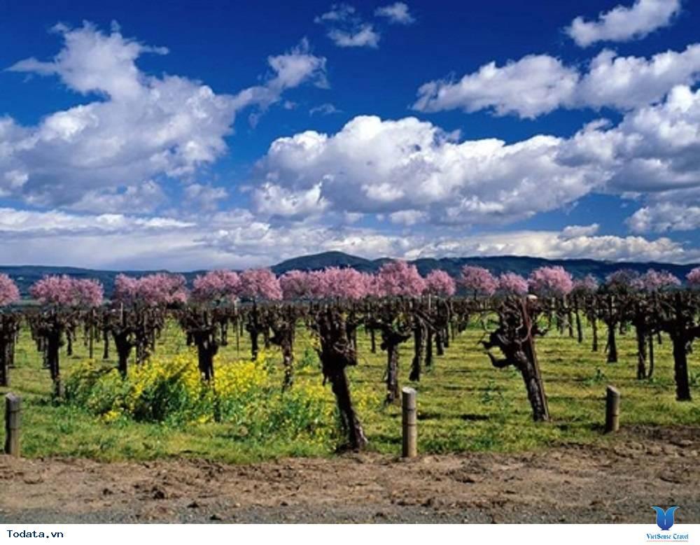 Vùng rượu vang Cape - Ảnh 2